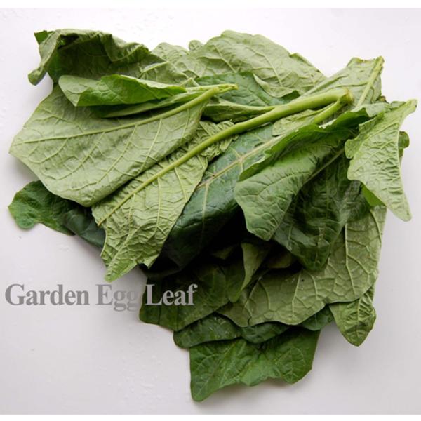 Garden Egg Leaf – African Spices